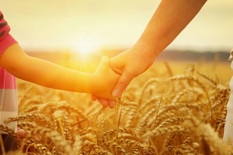 Hands of mother and daughter on sun. Holding each other on wheat field, Anne ve kızı buğday tarlasında güneşe karşı el ele